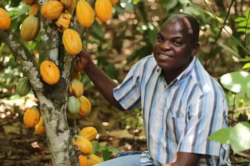 cocoa-farming-business-in-nigeria