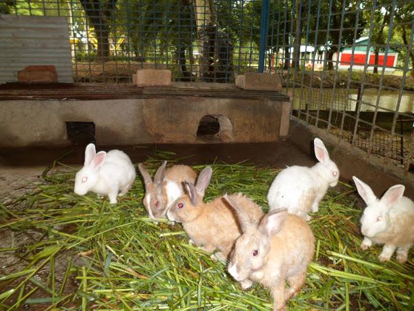 start a rabbit farm in Nigeria
