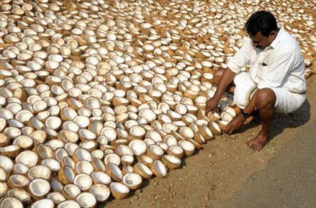 coconut oil production business