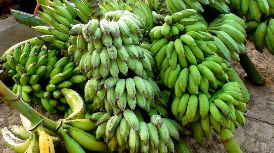 start and run a banana farm