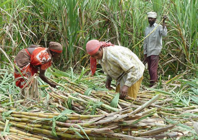 start a profitable sugarcane farming business
